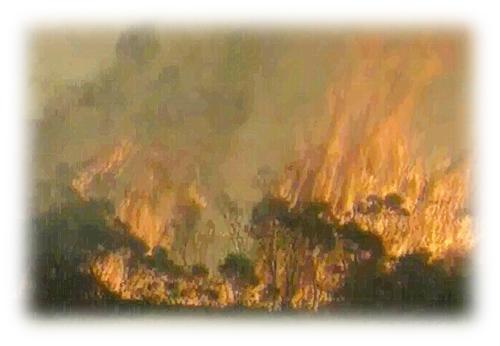 烧火木贴图