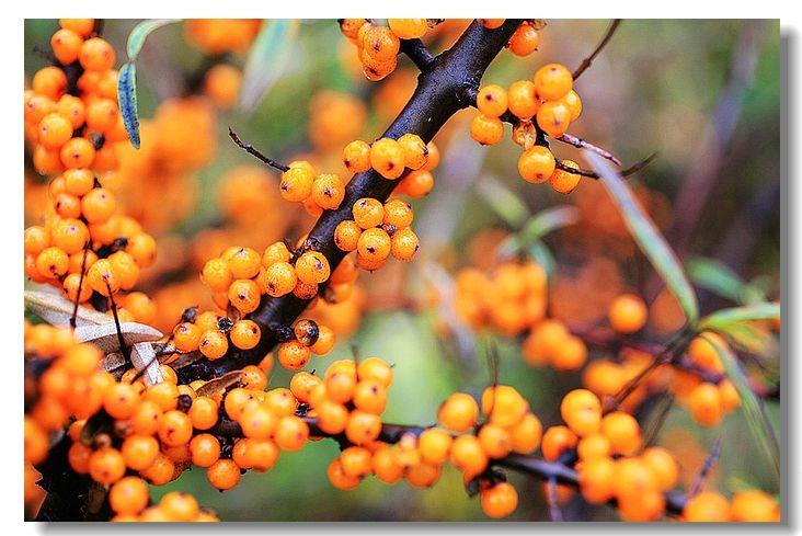 豆子粘贴画秋天树